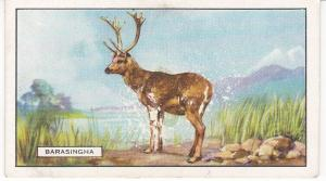 Cigarette Cards Gallaher Wild Animals No 48 The Barasingha