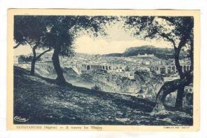 CONSTANTINE , Algeria , 00-10s; A travers les Oliviers