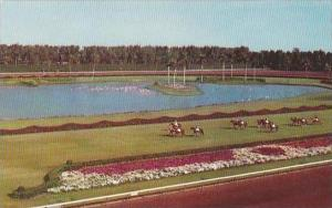 Florida Miami Hialeah Race Course Parading To The Post