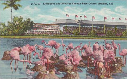 Florida Miami Flamingos And Nests At Hialeah Park