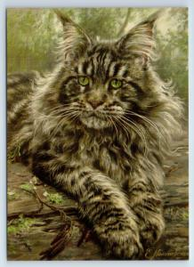 BIG GRAY CAT Maine Coon with Green Eyes New Unposted Postcard