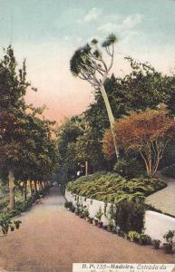 Entrance/Entrance, Madeira, Portugal, 1900-1910s