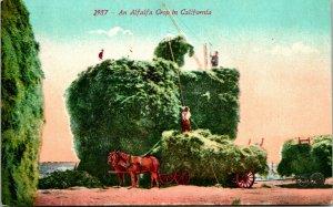 Vtg Cartolina 1900s Un Alfalfa Corto IN California - Non Usato Ed Mitchell Pub