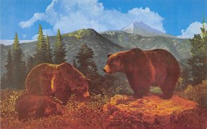 Bear Post Card The Three Bears, Grizzly North America Unused