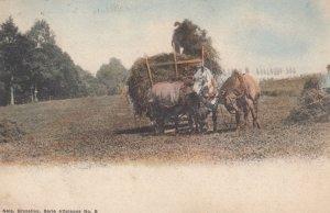 Farmer Baling hay , Belgium , 1919