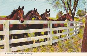 Horses Greetings From South Central Pennsylvania