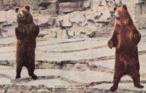 ST LOUIS , Missouri , 1930-40s ; Forest Park Zoo , Bears