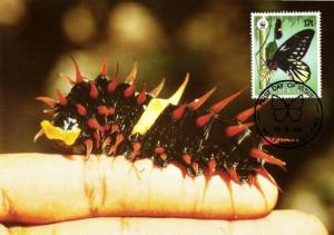 Papua New Guinea, Queen Alexandra's Birdwing Larva Butterfly Postcard (1988)