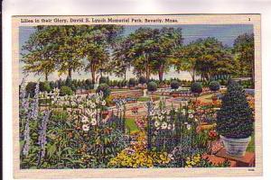 Flower Garden, Lilies, David Lynch Memorial Park, Beverly, Massachusetts, Str...