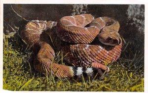 Snakes/Reptiles Red Diamond Rattlesnake Western United States Unused