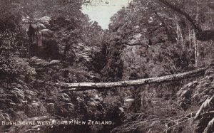 RP; NEW ZEALAND, 1910-1930's; Bush Scene, West Coast