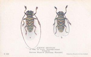 Sternotomis Calliandi Exotic Beetles Antique Natural History Museum Postcard
