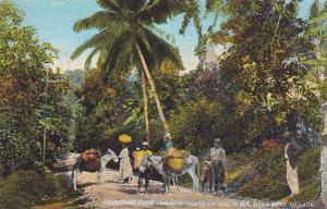 Scene on Bog Walk near Kent Village, Jamaica, 00-10s