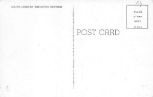 Lobster Post Card Maine Lobster Weighing Station Unused