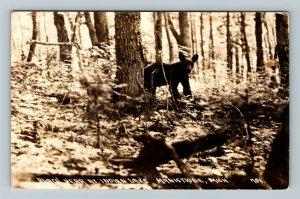 RPPC of Manistique MI-Michigan, Black Bear At Indian Lake, c1940 Postcard