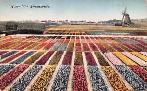 Holland Hollandsche Bloemenvelden  Hollandsche Bloemenvelden