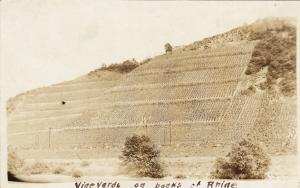 RP: Vineyards on the Rhine , Germany , 1910s