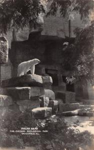 Brookfield Illinois~Zoological Park~Polar Bear~1941 Real Photo Postcard~RPPC