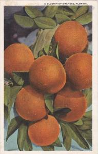 Florida Jacksonville A Cluster Of Oranges