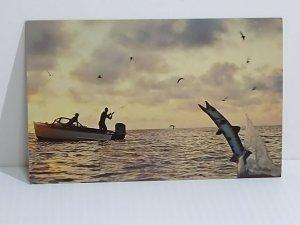Florida Fishing Barracuda Vintage Postcard Unposted