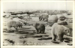 Polar Bears Arctic Ice Floe Johnston Real Photo Postcard
