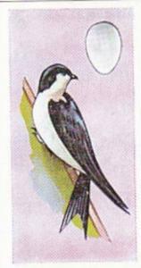 Sweetule Vintage Cigarette Card Birds & Their Eggs 1954 No 17 House Martin
