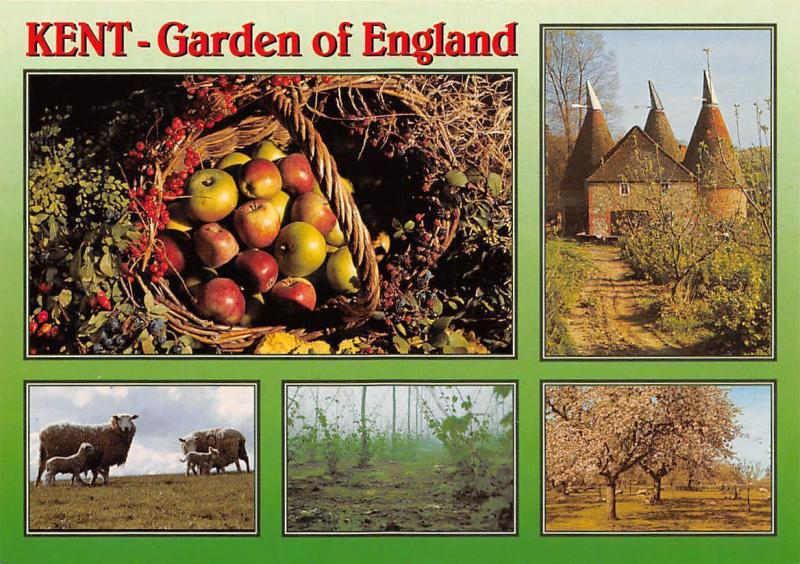 Kent Garden of England, Basket Apples Castle Tree Flowers Sheeps