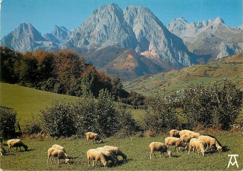 Animals Postcard Sheep herd hills trees mountin sky