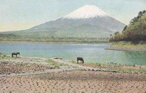 Cattle at Lake Shojin Fuji Five Lakes Antique Japanese Postcard