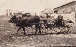 RP; The Goose Lake Special Ox cart, HANLEY , Saskatchewan, Canada , 00-10s McK