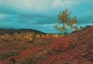Finnish Lapland autumn colors landscape postcard