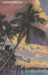Tropical Palm In Florida Curteiclh