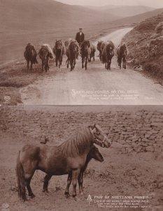 Shetland Ponies 2x Real Photo Postcard s