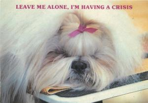 Puppy dog having a crisis postcard