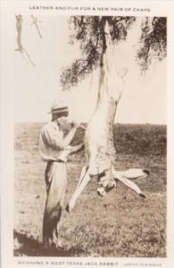 Humour Exageration Man Skinning A Large West Texas Jack Rabbit Photo
