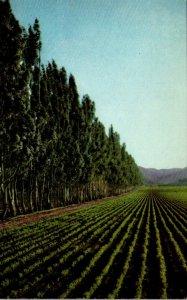 California Salinas Valley Sugar Beet Field Near King City Union 76 Card