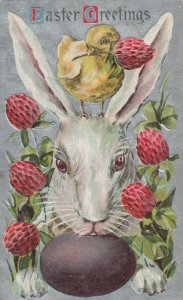 EASTER Greetings, Rabbit, Chick, Egg and Flowers, PU-1911
