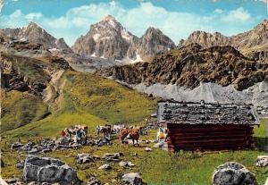 Italy Cabin Mountain Hutte Cows Animals