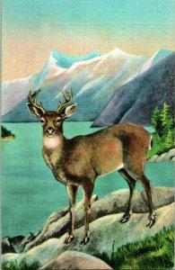Vtg Lino Tarjeta Postal Blacktail Ciervo Sitka American Wild Vida De Northwest &