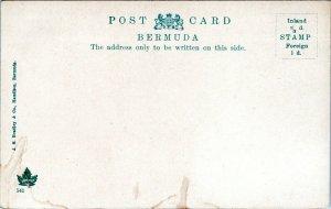 Bermuda Postcard 1905 Black Children in Rubber Tree MT