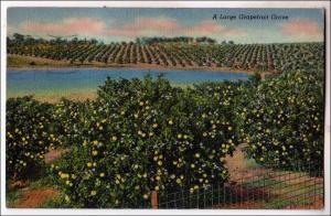 Grapefruit Grove