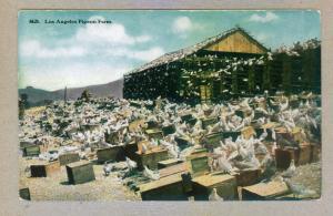 Los Angeles Pigeon Farm unused Postcard