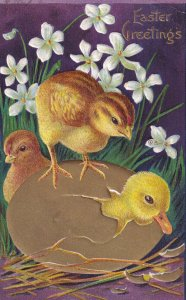 AS: EASTER, 1900-10s; Greetings, Chicks looking at Duckling cracking out of g...
