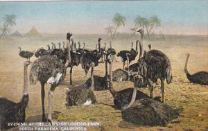 California South Pasadena Evening At The Cawston Ostrich Farm