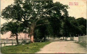 Vintage Postcard Early 1900s Shell Drive, Biloxi Mississippi Street View