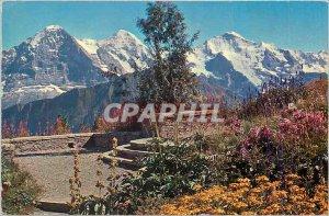 Modern Postcard Schynige Platte Alpengarten mit Eiger Monch und Jungfrau