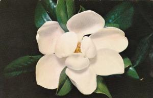 Mississippi Jackson The Magnolia
