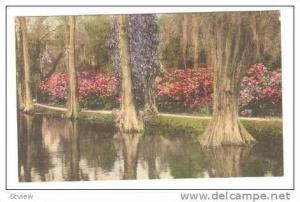 Trees In Pond,Magnolia Gardens,Charleston,South Carolina,00-10s