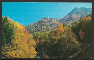 Tennessee - Autumn Colors near The Chimney Tops - [TN-079]
