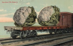 13061 Exaggeration: Cauliflower - The Kind We Raise - Grov & Bos RPO Cancel 1914